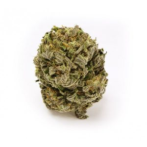 Buy Amnesia Haze