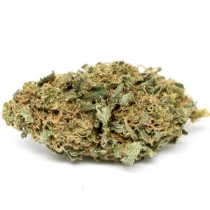 Buy Blueberry Marijuana Strain