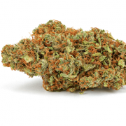 Buy God's Gift Marijuana Strain