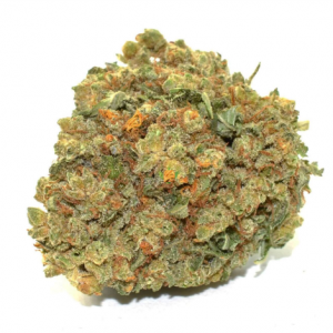 Buy Moby Dick Marijuana Strain